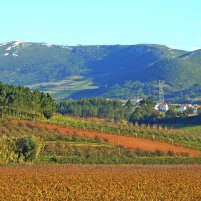 Quinta do Gradil Vineyard